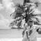 Hochzeitsfotograf_Seychellen_Sebastian_Muehlig_www.sebastianmuehlig.com_183