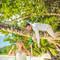 Hochzeitsfotograf_Seychellen_388