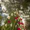 Hochzeitsfotograf_Seychellen_044