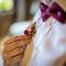 wedding_photographer_seychelles_049