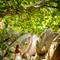 Hochzeit_Seychellen_315
