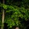 hochzeit_fotograf_seychellen_208