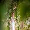 hochzeit_fotograf_seychellen_252