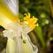 hochzeit_fotograf_seychellen_038