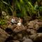 hochzeit_fotograf_seychellen_199