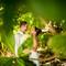 hochzeit_fotograf_seychellen_151