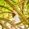 Hochzeitsfotograf_Seychellen_563