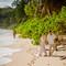 Hochzeitsfotograf_Seychellen_Sebastian_Muehlig_www.sebastianmuehlig.com_271