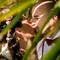 wedding_photographer_seychelles_208