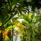 hochzeit_fotograf_seychellen_258
