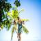 hochzeit_fotograf_seychellen_311