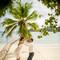 hochzeit_fotograf_seychellen_249