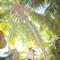 hochzeit_fotograf_seychellen_110