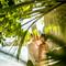 hochzeit_fotograf_seychellen_154