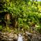 hochzeit_fotograf_seychellen_270