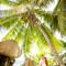 Hochzeit_Seychellen_337