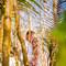 Hochzeitsfotograf_Seychellen_Sebastian_Muehlig_www.sebastianmuehlig.com_265
